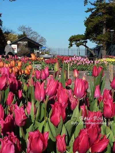 ひと足お先に、春で〜し♪^^_d0128697_22273049.jpg