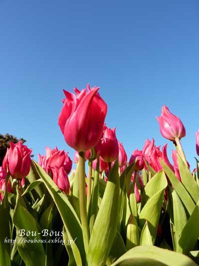 ひと足お先に、春で〜し♪^^_d0128697_22273211.jpg