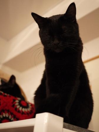真っ黒猫 ろった編。_a0143140_2329444.jpg