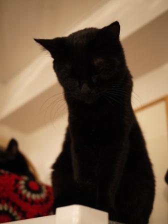 真っ黒猫 ろった編。_a0143140_23335752.jpg
