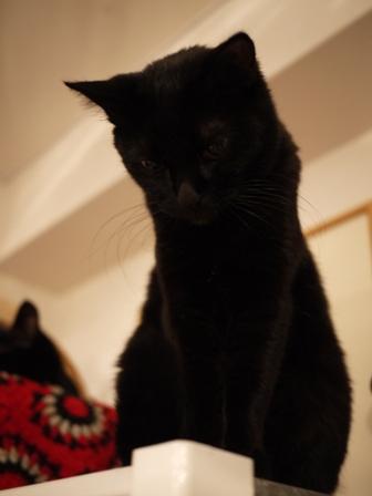 真っ黒猫 ろった編。_a0143140_23353050.jpg