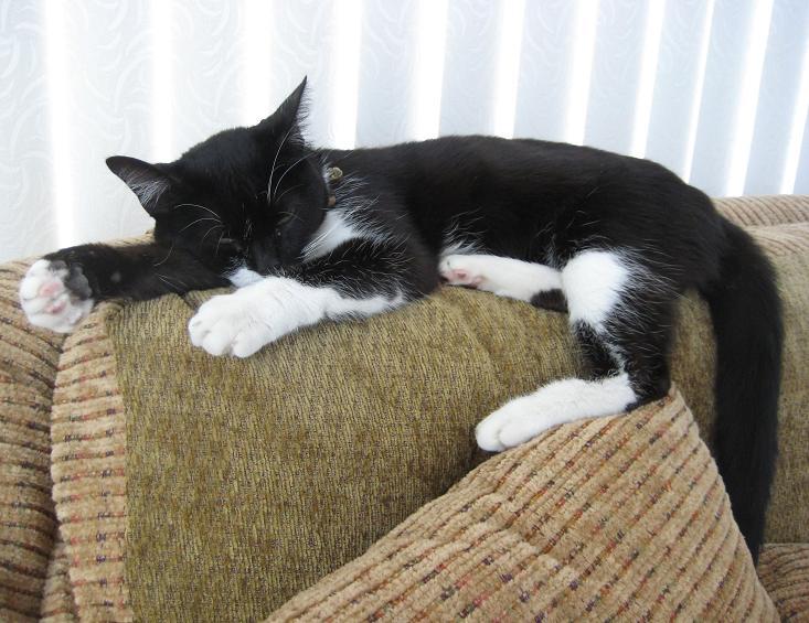 Sleeping Beauty のはずだったのに...。_c0119140_1564964.jpg