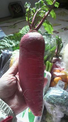 今〜野菜…高いっす!!_d0051146_1342213.jpg