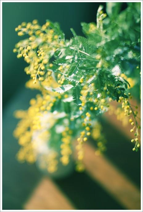 mimosa_c0157248_2344071.jpg