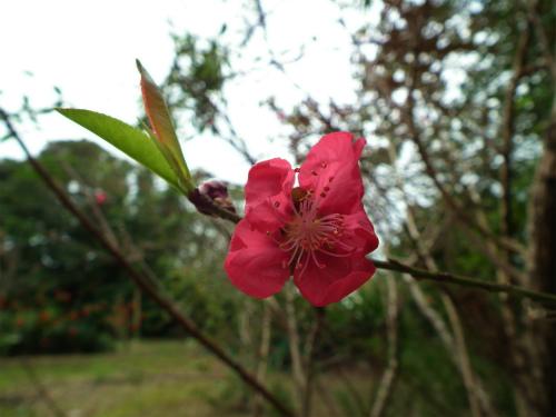 諸鈍の桜はもう少し待ってネ。_e0028387_22325177.jpg