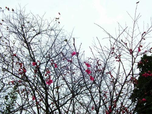 諸鈍の桜はもう少し待ってネ。_e0028387_22364840.jpg