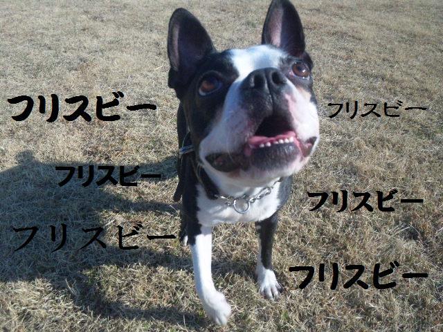 ★土手に現れる犬好きなクマ★_d0187891_22261314.jpg