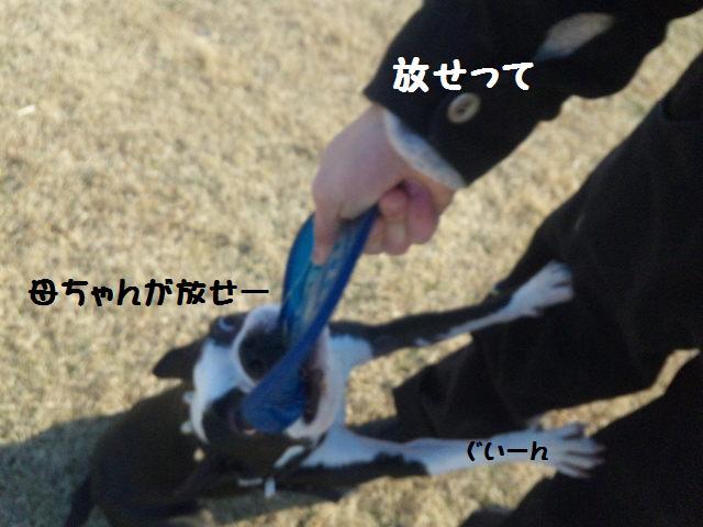 ★土手に現れる犬好きなクマ★_d0187891_22262883.jpg