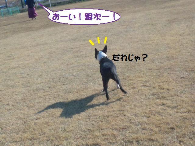 ★土手に現れる犬好きなクマ★_d0187891_22263540.jpg