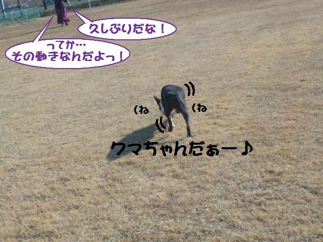 ★土手に現れる犬好きなクマ★_d0187891_22264196.jpg