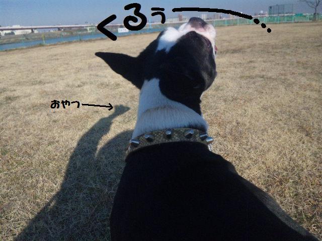 ★土手に現れる犬好きなクマ★_d0187891_222723100.jpg