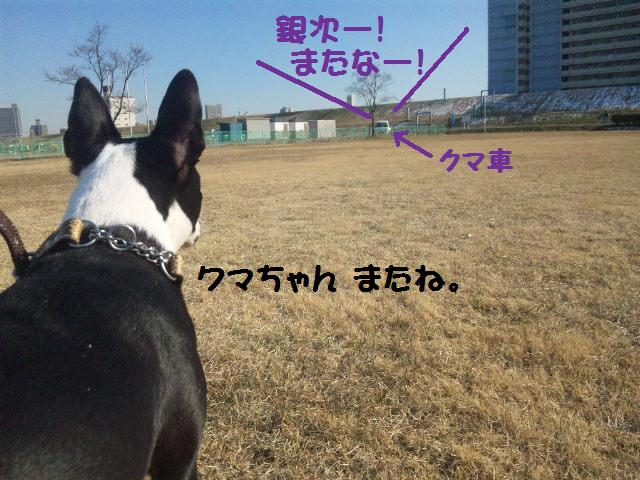 ★土手に現れる犬好きなクマ★_d0187891_222729.jpg
