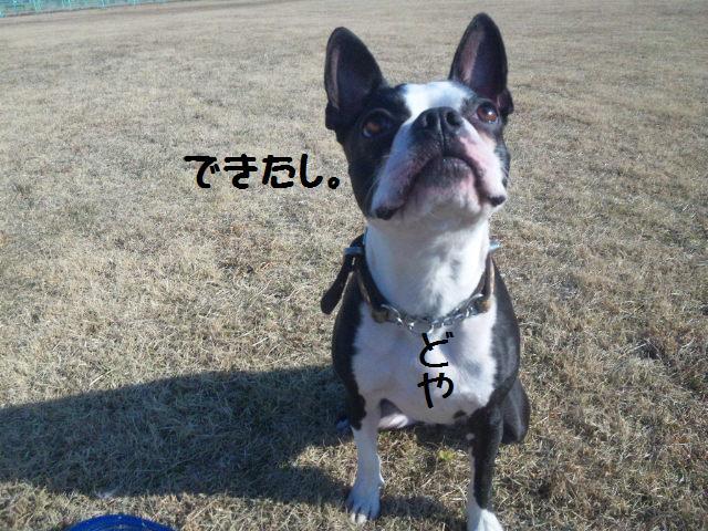 ★土手に現れる犬好きなクマ★_d0187891_22273625.jpg