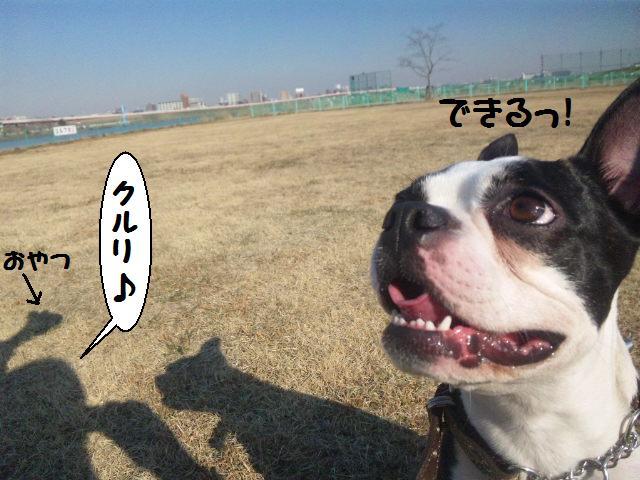 ★土手に現れる犬好きなクマ★_d0187891_2227897.jpg