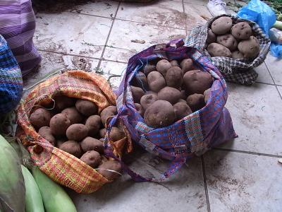 ++原産地ペルーで出会ったジャガイモ++_e0140921_921916.jpg