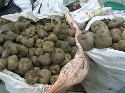 ++原産地ペルーで出会ったジャガイモ++_e0140921_92229.jpg