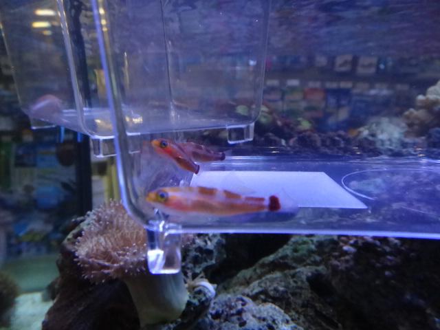 海水魚・水草・淡水魚_f0189122_12573727.jpg