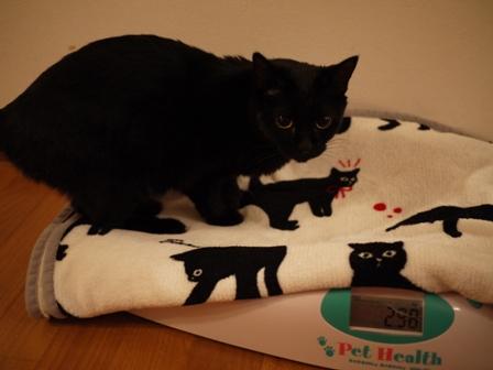 体重測定猫 ろった編。_a0143140_23181486.jpg