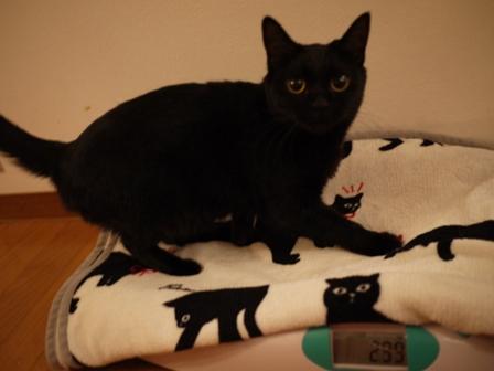 体重測定猫 ろった編。_a0143140_2320139.jpg