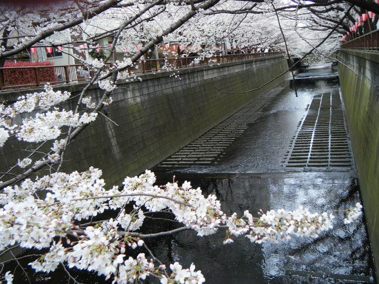 サクラサク、咲きますように。桜づくし。。。_e0060341_14302127.jpg