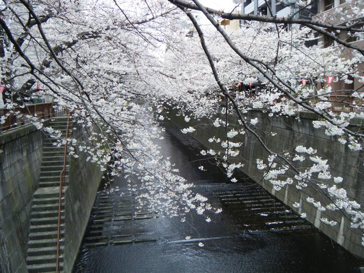 サクラサク、咲きますように。桜づくし。。。_e0060341_14303883.jpg