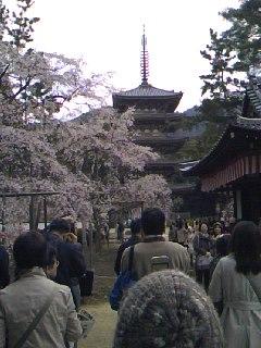 サクラサク、咲きますように。桜づくし。。。_e0060341_14305914.jpg