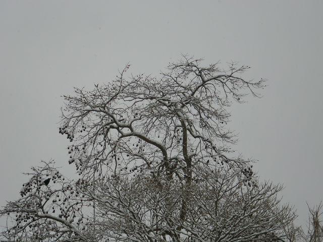 雪ですよ~_b0207642_12522274.jpg