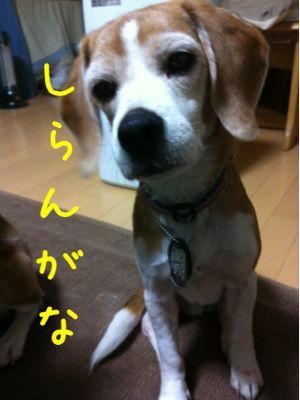 b0098660_20162715.jpg