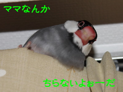 b0158061_134246.jpg