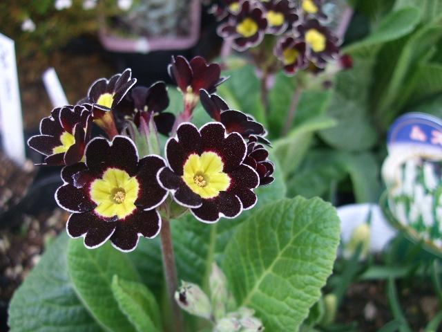 オークリーフ(モノトーンの花)_f0049672_1355567.jpg