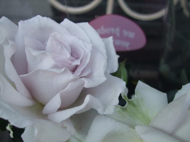 オークリーフ(モノトーンの花)_f0049672_1424990.jpg