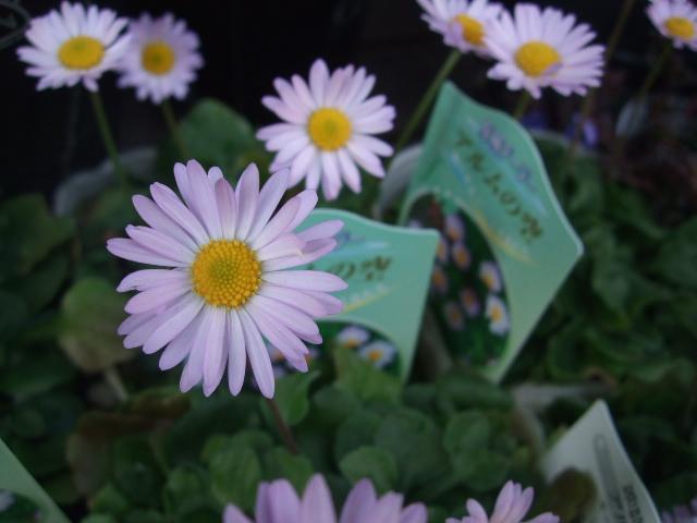 オークリーフ(モノトーンの花)_f0049672_143033.jpg