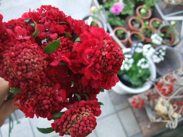 オークリーフ(モノトーンの花)_f0049672_1484286.jpg
