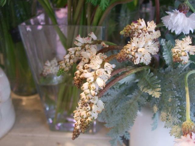 オークリーフ(モノトーンの花)_f0049672_1484976.jpg