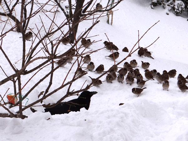 昨日はこの冬一番の吹雪でした ^^_a0136293_1633834.jpg