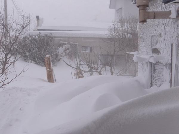 昨日はこの冬一番の吹雪でした ^^_a0136293_16395532.jpg