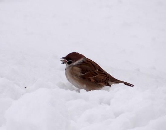 昨日はこの冬一番の吹雪でした ^^_a0136293_1704666.jpg
