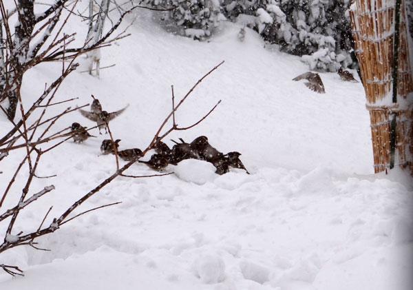 昨日はこの冬一番の吹雪でした ^^_a0136293_1715315.jpg