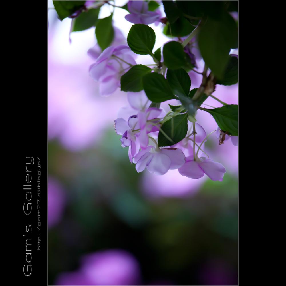 香る色香_f0195893_16525522.jpg