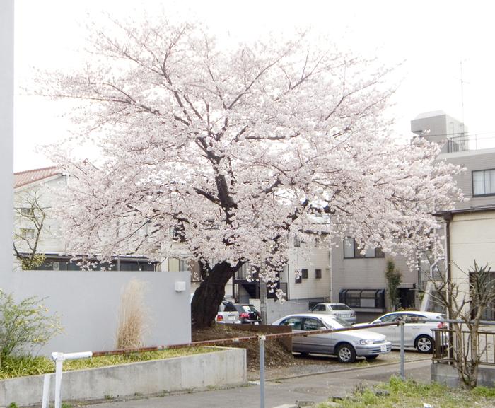 西沢立衛さんとの建築プロジェクト_c0231905_12114382.jpg