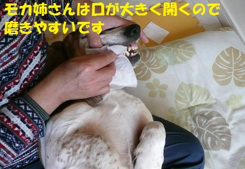 f0121712_851149.jpg