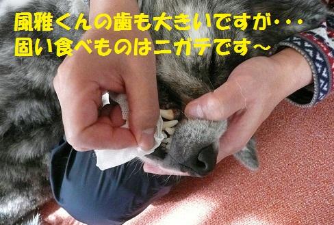 f0121712_884175.jpg
