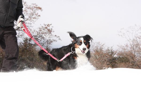 雪遊び in 浅間牧場_f0203423_13371826.jpg
