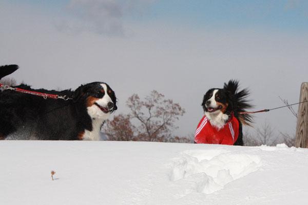 雪遊び in 浅間牧場_f0203423_13373129.jpg