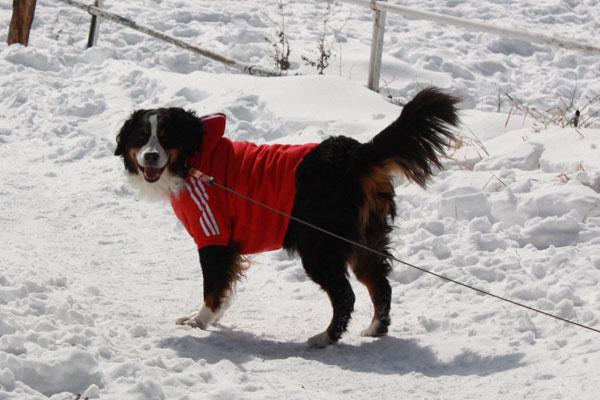 雪遊び in 浅間牧場_f0203423_1337867.jpg