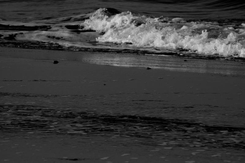 #1260 静かな冬の海・・・_b0177233_571790.jpg
