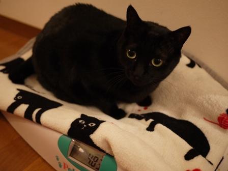 体重測定猫 空しぇるのぇる編。_a0143140_23321157.jpg