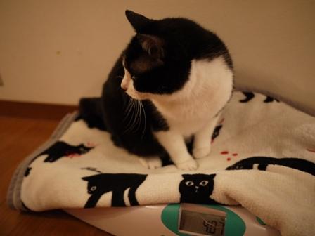 体重測定猫 空しぇるのぇる編。_a0143140_23325259.jpg