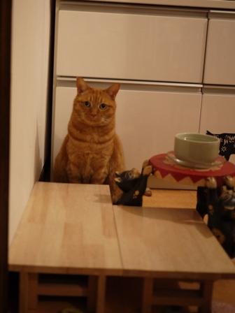 体重測定猫 空しぇるのぇる編。_a0143140_23381394.jpg