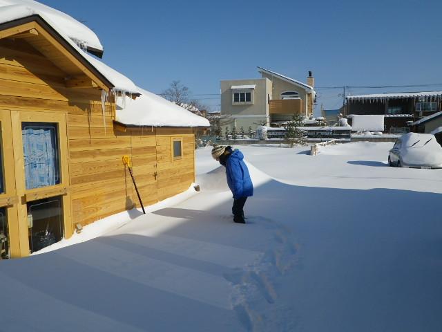 大雪。。。泣_b0207642_1358429.jpg